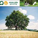 Hlasujte pro Strom roku 2008