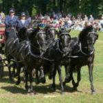 Jezdecký den ve Slatiňanech