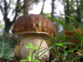 Mykologická vycházka do lesů na Podhůře