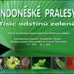 Indonéské pralesy – Tisíce odstínů zelené