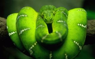 Hadí rekordmani