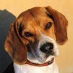 Upozornění pro majitele psů