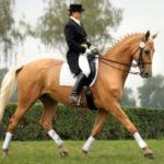 Koně v akci na téma tradic