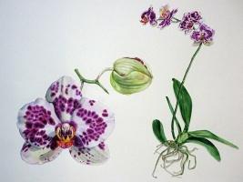 Výstava botanických ilustrací