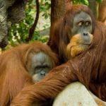 Exotická Sumatra v Duhové kavárně