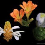 Zámecké květy – rostliny zámeckých skleníků a interiérů