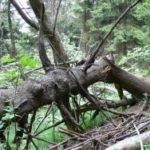Byli jste v pralese? Teď máte možnost se do něj podívat a dokonce mu i pomoci.
