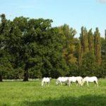 Cyklovýlet – Za Starokladrubským koněm