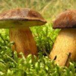 Výstava hub – Slatiňany
