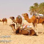 Tunisko – překvapení Severní Afriky