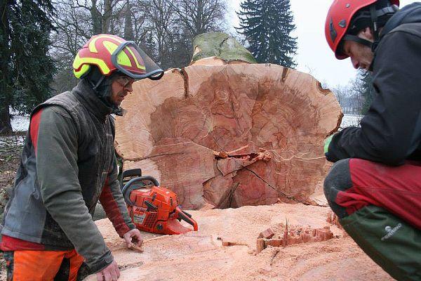 Nejkrásnější buk Chrudimska padnul, foto: kastelán zámku Slatiňany