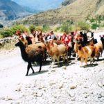 Přes Kordillery, aneb putování Jižní Amerikou