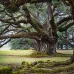 Seriál – Staré a památné stromy Chrudimska X. – Dubové aleje