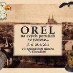 Orel se na svých perutích vznese v Regionálním muzeu v Chrudimi