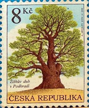 Seriál - Staré a památné stromy Chrudimska IX. - Žižkův dub