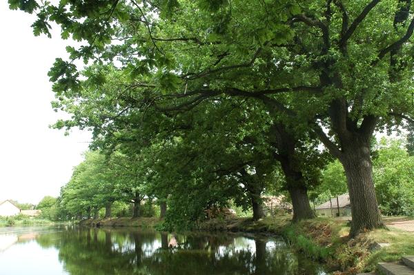 Drahotický rybník