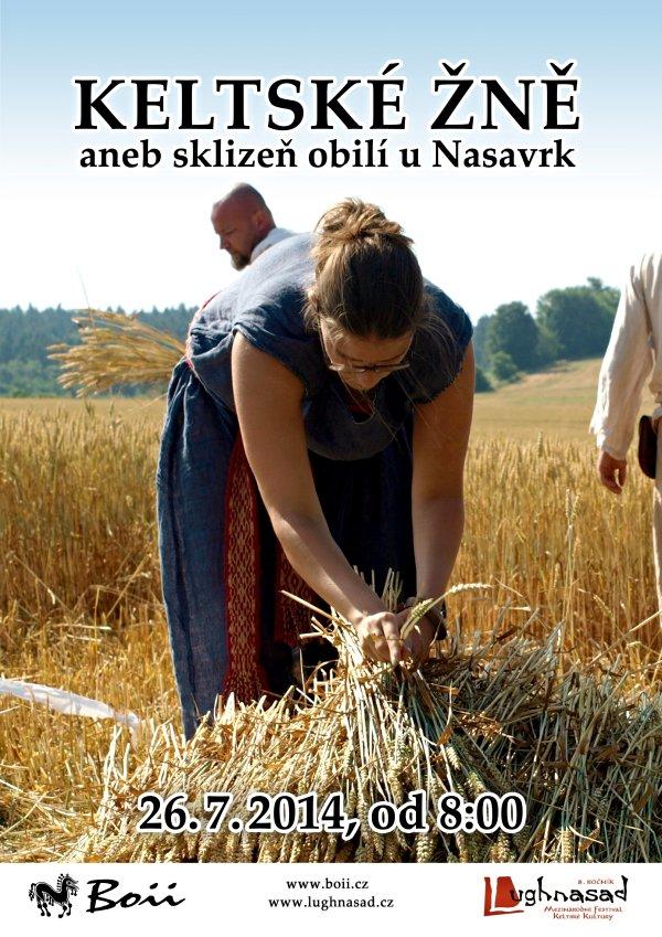 Sklizeň obilí v Nasavrkách