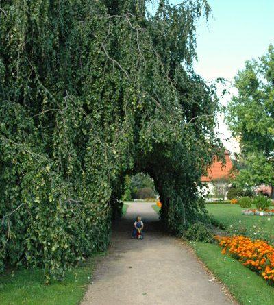 Bukový tunel