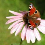 Motýli denní i noční
