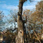 Seriál – Staré a památné stromy Chrudimska XVIII. – Cizokrajné druhy