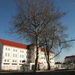 Seriál – Staré a památné stromy Chrudimska XIX. – Platany