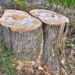Chrudim – informace Odboru životního prostředí