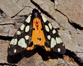 Vycházka na motýly
