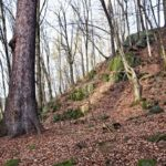 Staré a památné stromy Chrudimska III. – Jehličnany