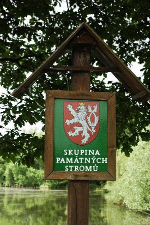 Staré a památné stromy Chrudimska