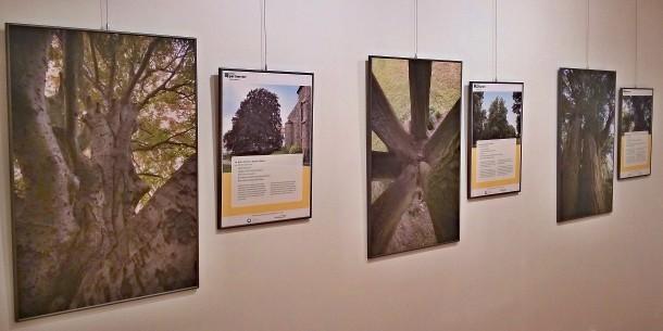 Za stromy roku do Heřmanova Městce