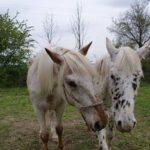 Benefice pro Koňskou záchytku