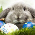 Proč se vlastně slaví Velikonoce?