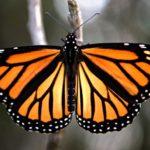 Entomologická burza v Pardubicích