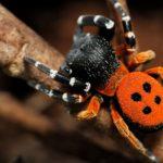 Výstava makrofotografií pavouků