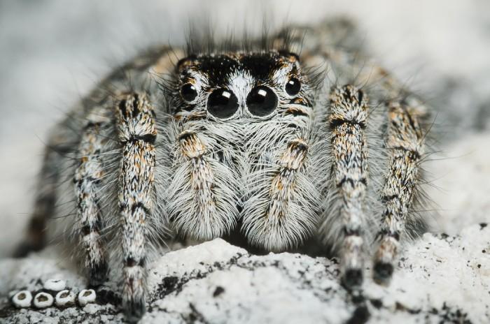 Pavouci výstava Radek Šich
