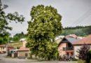 Evropský strom roku 2019