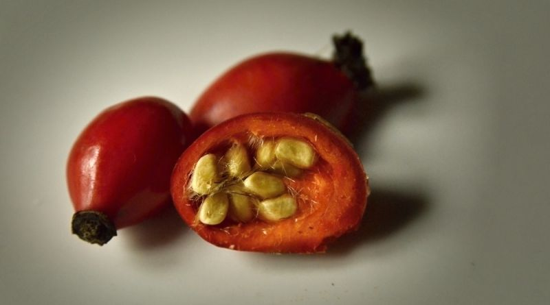 Šípek - plod