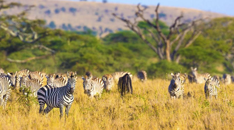 Tanzánie – Safari Njema