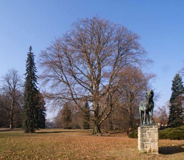 Buk ve slatiňanském parku