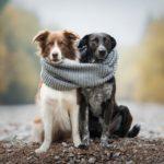 Chrudim má vlastní registr psů, usnadní dohledání jejich majitelů