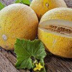 Meloun – nízkokalorické letní osvěžení