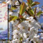 Kde rostou divoké třešně