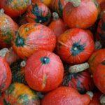 Dýně hokkaidó – zázračný plod nejen vprevenci vzniku rakoviny