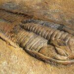Deblov – 500 000 000 let staré dno moře