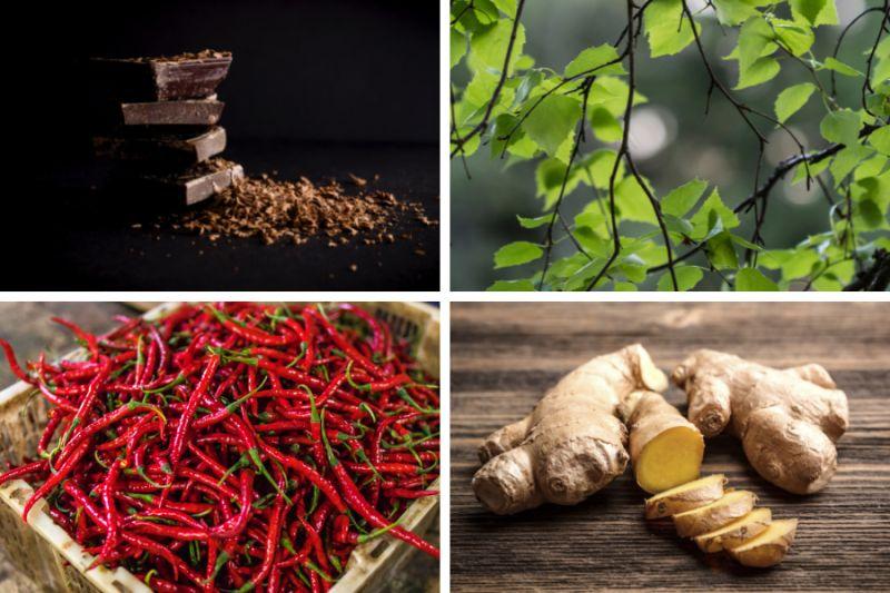Hořká čokoláda, březové listy, chilli papričky, zázvor.