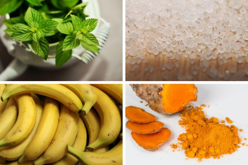 Máta peprná, Epsomská sůl, banány a kurkuma.